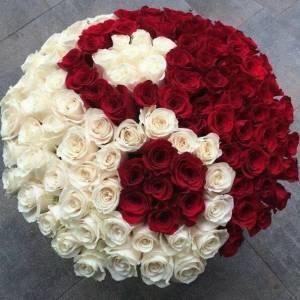 Коробка 101 роза красная и белая с упаковкой R1254